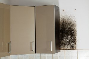 Mold in Your Kitchen
