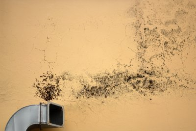 Mold Inspection in San Francisco