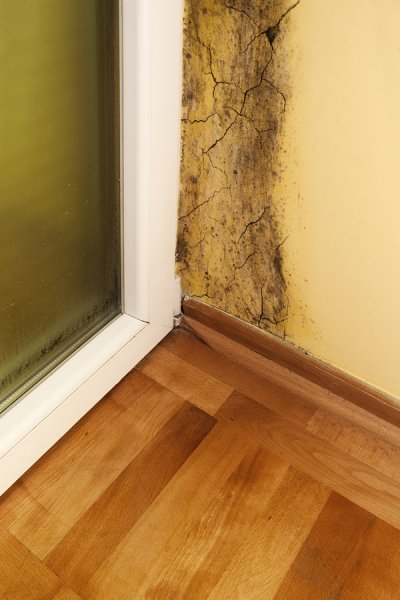 Mold Removal Bay Area